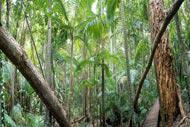 Les forêts du Queensland font partie des plus fournies en plantes terrestres.