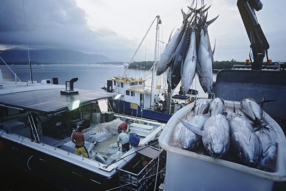 Come nella maggior parte delle città costiere australiane, è possibile assistere ad incredibili battute di pesca.
