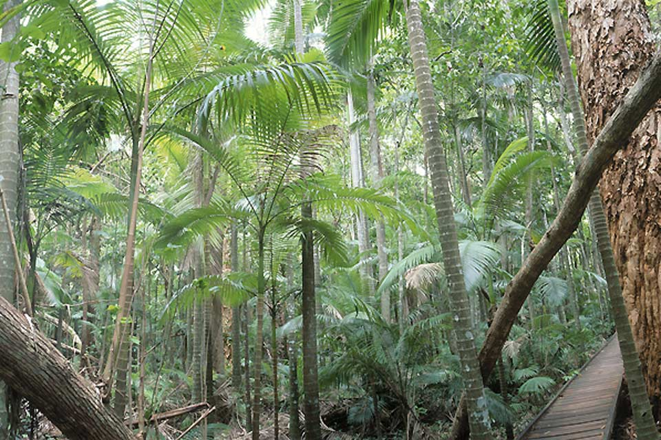 The forests of Queensland are some of the richest in terms of terrestrial plants.