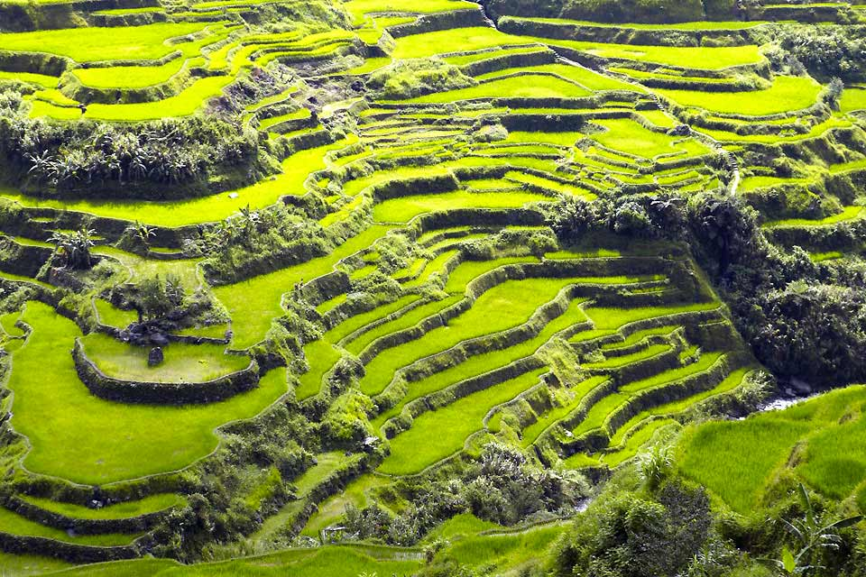 The northern part of the island of Luzon is easily accessible. The roads are in a good state and there are numerous airports. There are several sights to see, some of which are listed as UNESCO World Heritage Sites and are the pride of the region, attracting many travellers every year. Among these are the famous Banaue rice fields, which cover 95 sq mi and (some of which) are over 3,000 years old. ...
