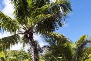 Océan Indien; Seychelles; Denis Island;