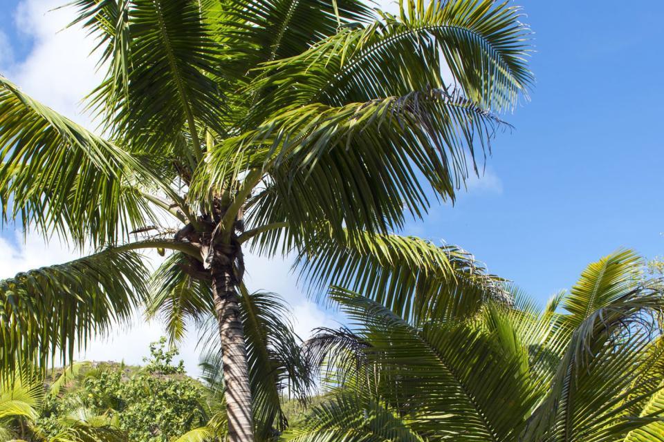 Oasi verdeggiante nel bel mezzo dell'Oceano Indiano, Denis Island è una superba isola corallina che ospitauna struttura alberghiera di lusso sulla sua parte occidentale. L'isola si trova a 95 km a nord di Mahé. Il transfer dall'aeroporto di Mahé viene effettuato in Twin Otter 800, un piccolo apparecchio che copre il tragitto in 30 minuti. Si atterra su di una pista in erba: emozioni garantite! Denis ...