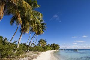 Océan Pacifique; Polynésie; Tuamotu; Fakarava;