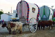 Cada año, miles de peregrinos se dirigen en caravana, a pie o a caballo hasta la aldea del Rocío para conmemorar la aparición de la Virgen del Rocío.