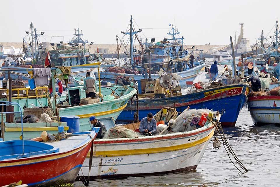 L'animation qui s'empare du marché aux poissons chaque matin, fait encore bien partie de la vie d'Alexandrie.