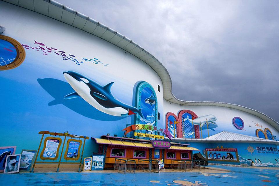 """L'Aquarium d'Harbin est l'un des plus grands au monde. Dans le """"village arctique"""", les touristes peuvent observer le plus grand ours polaire de Chine."""