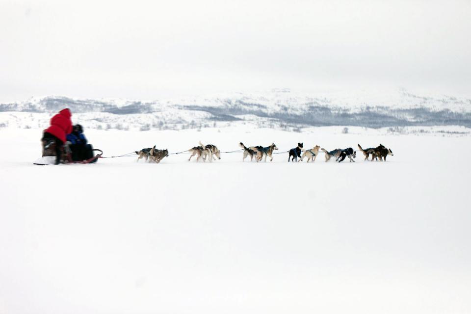Terre du Père Noël, la Laponie finlandaise est un endroit où les rennes sont plus nombreux que les humains, où la nature intacte recouvre des milliers de kilomètres, et où le climat glacial sépare les touristes robustes des moins courageux. Ici, il y a des montagnes, des forêts et de lacs : tout pour mettre les amoureux de la nature à l'aise ! C'est un endroit où vous pouvez essayer toutes sortes de ...