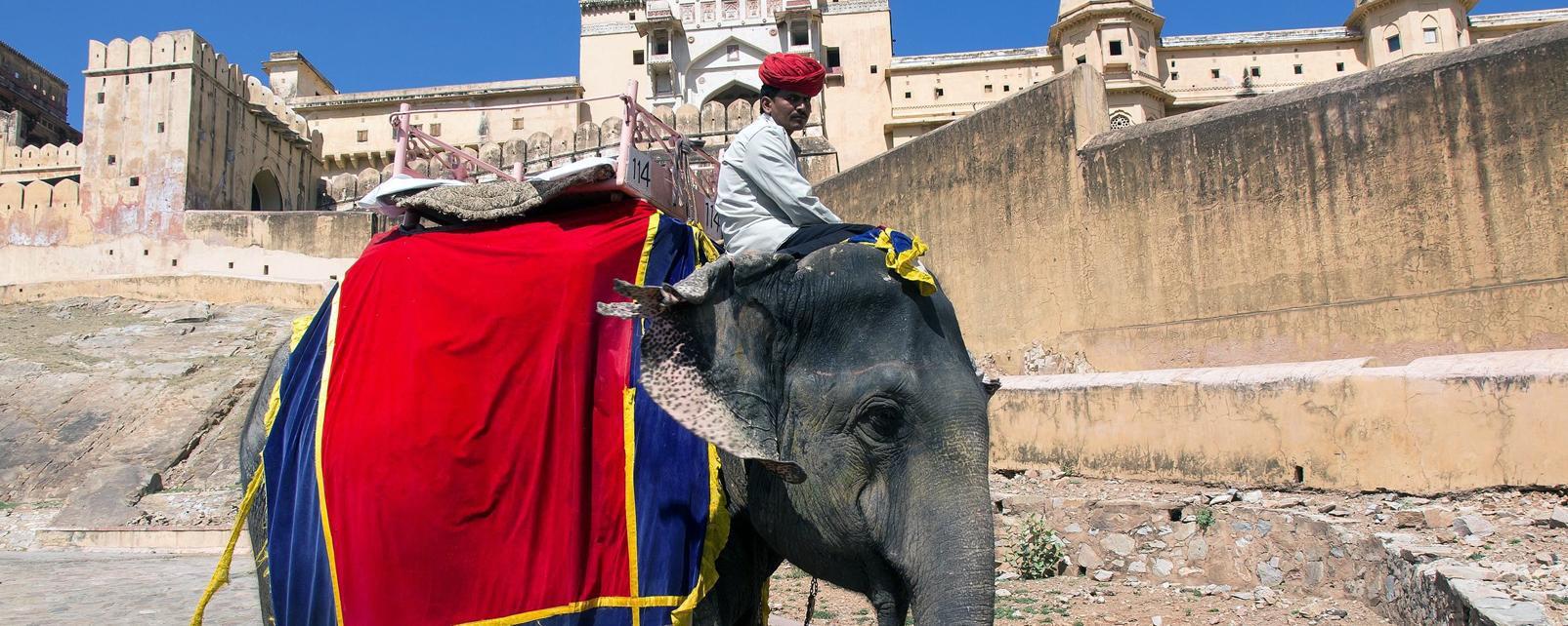 Asie; Inde; Rajasthan; Jaipur;