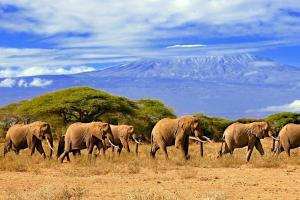 Afrique; Tanzanie; Kilimanjaro;