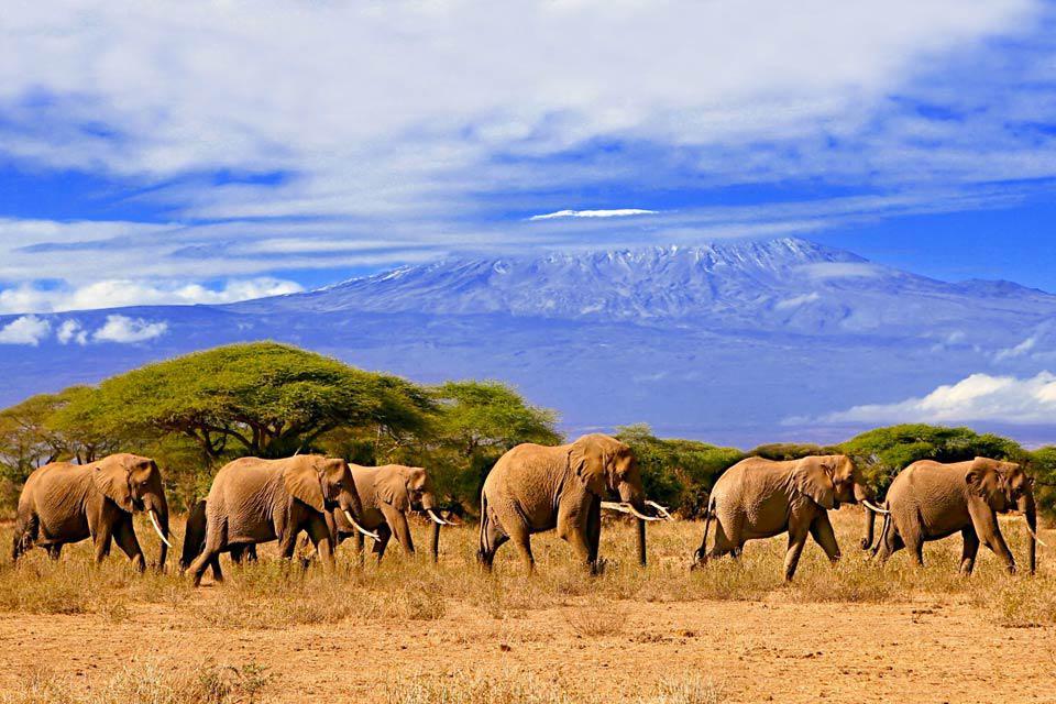"""C'est un des sommets les plus mythiques de la planète. Même si elle a une fâcheuse tendance à fondre, sa couronne de neige éternelle domine encore les hauts plateaux de l'Afrique de l'Est. Au Nord-Est de la Tanzanie, à la frontière avec le Kenya, c'est le toit de l'Afrique : le Kilimandjaro. Son nom est un mystère, il signifierait """"montagne de la lumière"""" ou """"montagne de la gloire"""" ou encore """"montagne ..."""