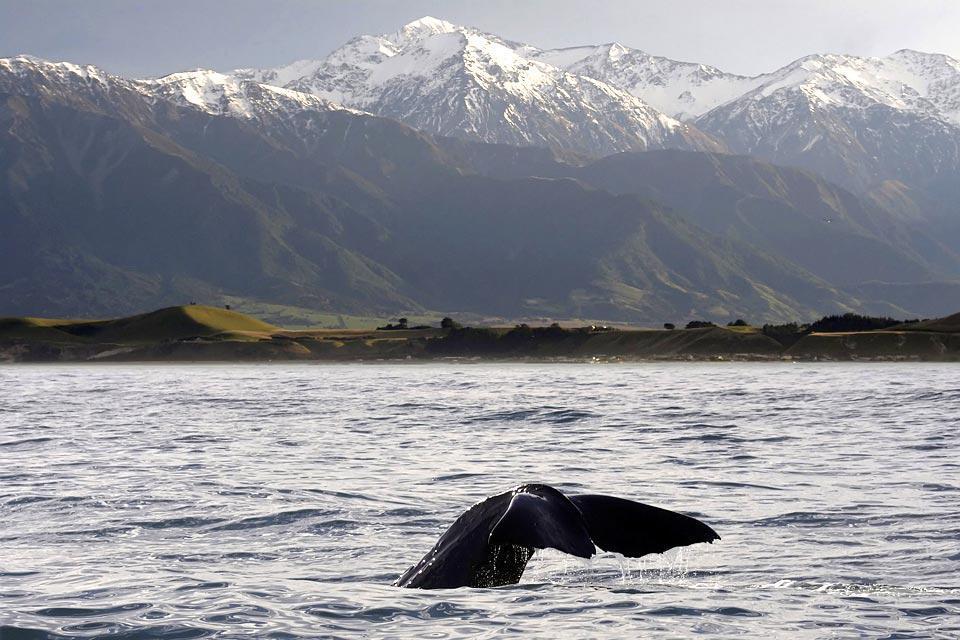 Potrete osservare delle balene nel loro ambiente naturale durante le escursioni in barca.