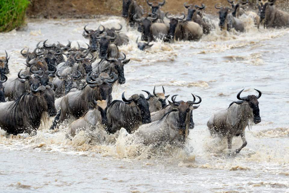 Grâce à une situation privilégiée à proximité du Mont Kilimandjaro et du parc du Serengeti, la ville d'Arusha  est aujourd'hui la capitale touristique de la Tanzanie. Point de départ de nombreuses expéditions, vous y trouverez la plupart des compagnies de Safari du pays. Actuellement peuplée par 250 000 habitants, la ville déborde d'activité et de couleurs. Outre son emplacement privilégié, vous ne ...