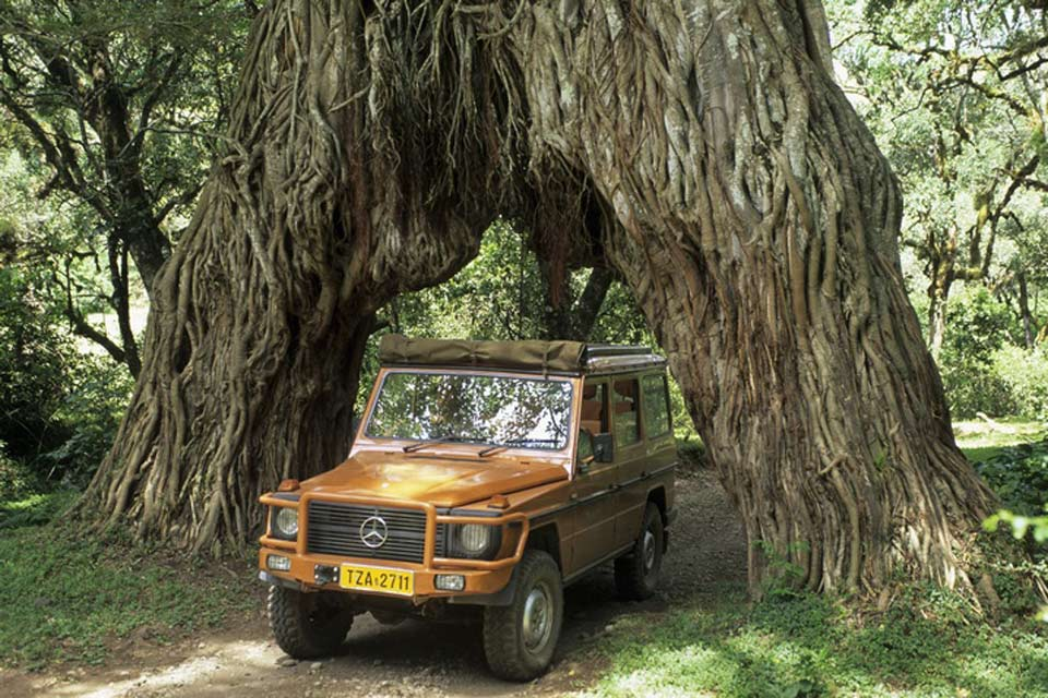 Dans le nord de la Tanzanie, la ville Arusha est la capitale des safaris, le parc national le plus proche porte son nom.