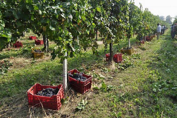 Hoy en día, la región de Brescia produce un vino con DOCG (denominación de origen controlada y garantizada), el Franciacorta, ocho vinos con DOC (denominación de origen controlada) y un IGT (indicación geográfica típica).