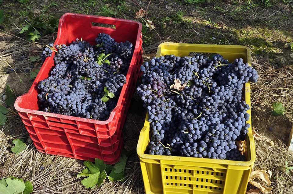 Wine production accounts for the largest agricultural sector in Brescia's food industry
