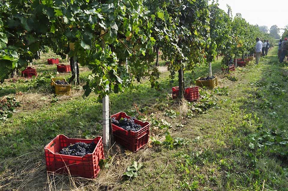 Le terroir de Brescia produit aujourd'hui un vin DOCG (appellation d'origine contrôlée et garantie), le Franciacorta, huit vins DOC (appellation d'origine contrôlée), et six IGT (vins de pays).