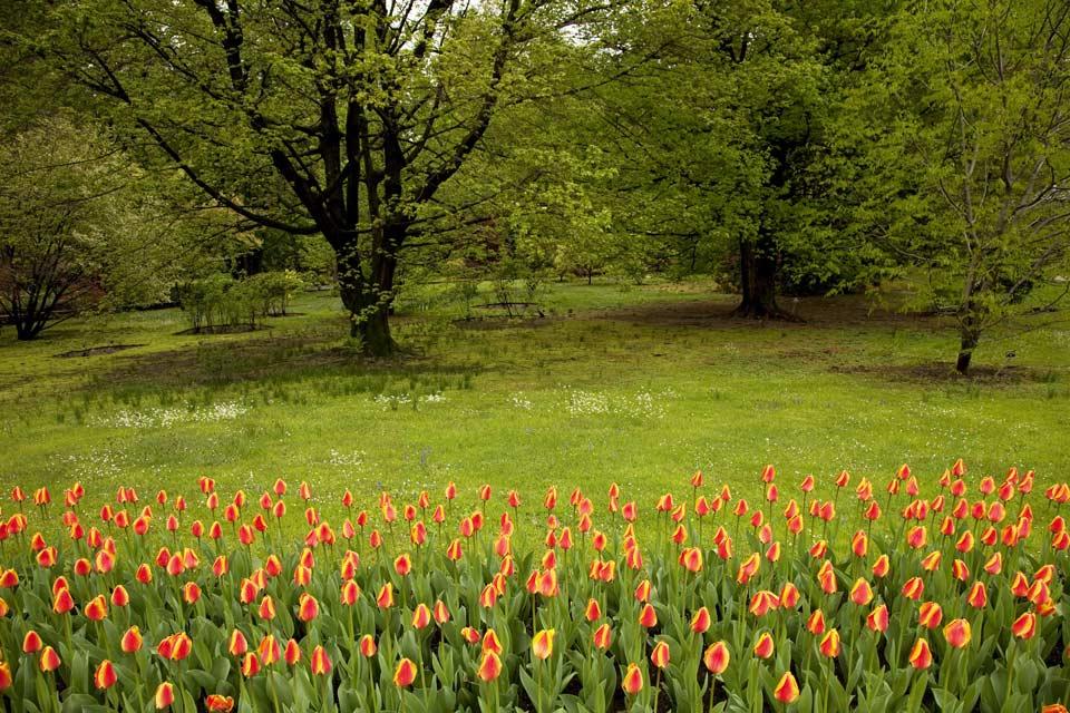 Verbania presenta un turismo sviluppato, forte della sua posizione geografica e per i Giardini Botanici di Villa Taranto.