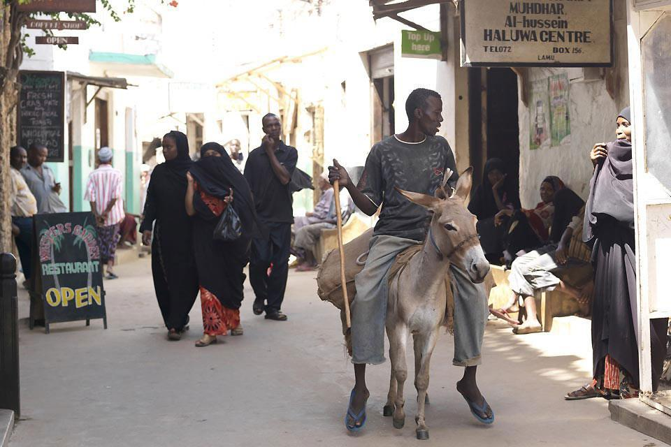 A local rides his donkey through the streets of Lamu's old town, a UNESCO World Heritage Site.