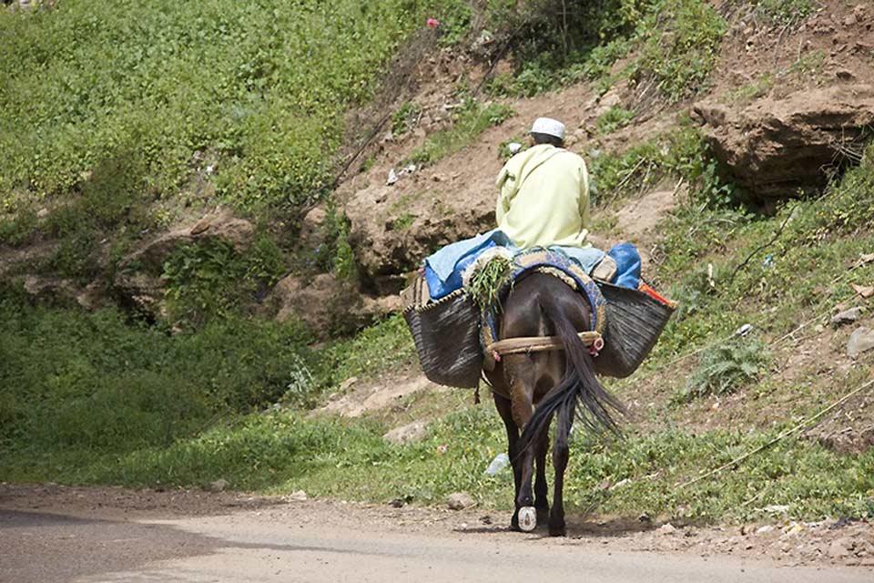 Ici à Salé, la vie de tous les jours est encore authentique et l'on se déplace en âne