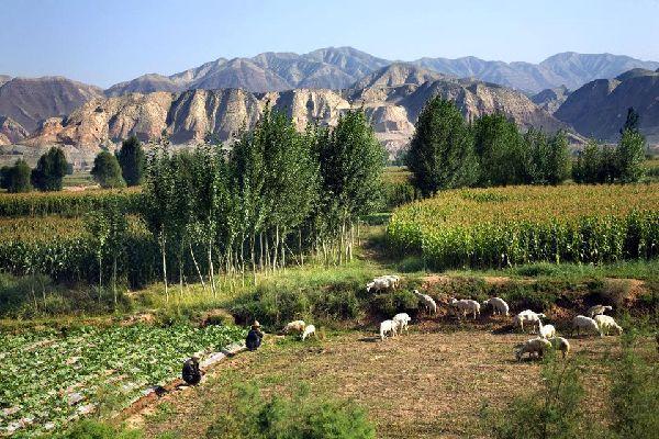 """La ruta de la Seda pasa obligatoriamente por Lanzhou, capital de la provincia de Gansu. Llamada la """"ciudad de las Orquídeas"""", esta pequeña ciudad en plena modernización ha perdido todo su encanto pasado. Sin embargo, ofrece algunos lugares interesantes como el parque de la Pagoda blanca, con preciosas vistas de la ciudad y del río Amarillo. En la colina del parque de las Cinco Fuentes se erige un santuario ..."""