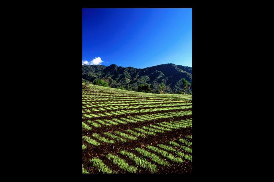 La vallée luxuriante du Chiriqui est particulièrement prisée des amateurs d'écotourisme et d'aventures sportives.