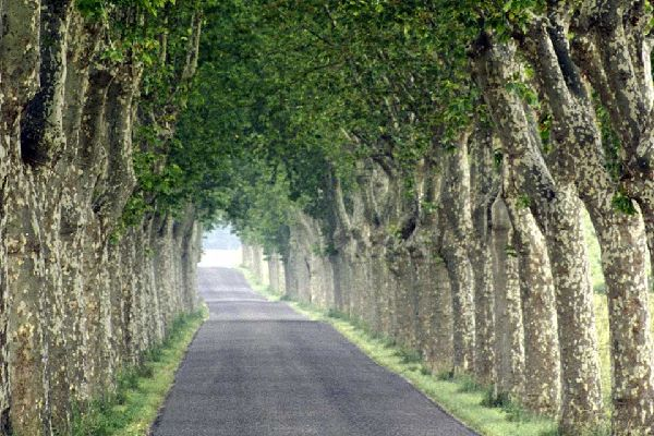 Cachée entre les routes sinueuses et les vallées de l'Authre, de la Jordanne et de la Cère se trouve Aurillac. Construite à 631 mètres d'altitude, Aurillac est la préfecture du département du Cantal. L'origine de la ville remonte à l'époque gallo-romaine mais son histoire n'est réellement connue qu'à partir de l'an 856. Souvent assiégée par les Anglais au cours du Moyen Âge, la ville ne se développe ...