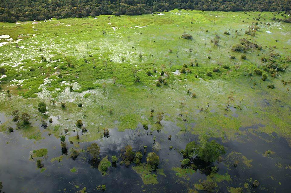 Manaus sembra piccola se paragonata all'imponenza della vegetazione che la circonda.