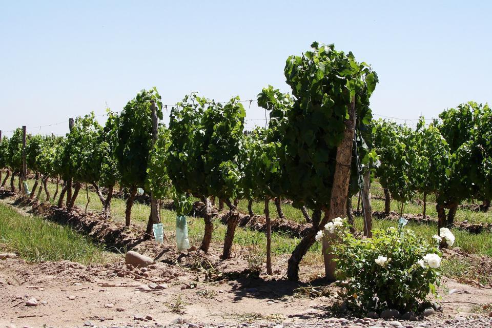 Beaucoup d'établissements vinicoles (bodegas) proposent des visites et des dégustations.