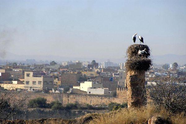 Meknes, una delle più importanti città del Marocco, fa parte dei siti protetti dell'Unesco.