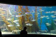 Este acuario público se encuentra en el centro de Melbourne.