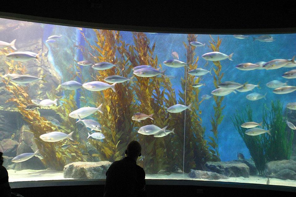Dieses öffentliche Aquarium befindet sich im Zentrum von Melbourne.