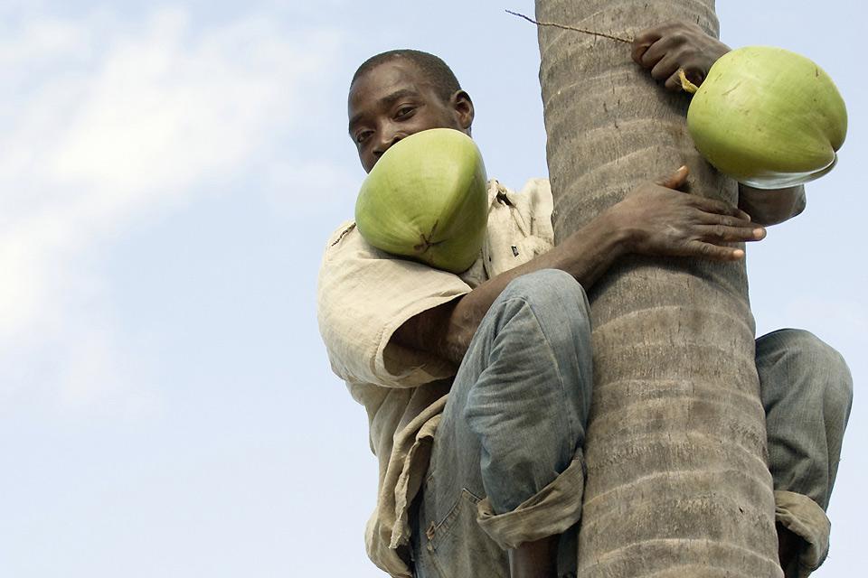 Maputo si concentra sull'esportazione di carbone, zucchero e pietre preziose. Tuttavia, gli agricoltori non arrivano a soddisfare i propri bisogni.