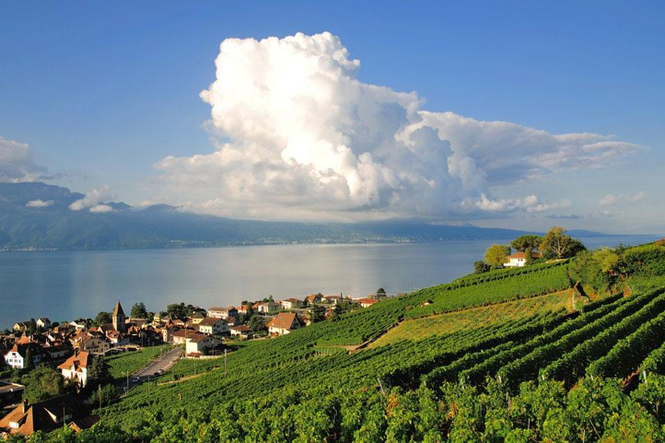 The city of Lausanne is located at the foot of vineyards of Lavaux which cover the surrounding hills.