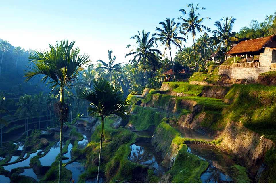 """Tappa imprescindibile quando si visita Bali, Ubud, la capitale balinese dello shopping artigianale, ha saputo conservare molto fascino ed autenticità, nonostante lo sviluppo notevole dell'""""industria turistica"""". La città dispone di numerosi hotel, dal 5* lusso al piccolo 2* e numerosissimi bar e ristoranti. Un soggiorno di 2giorni/1 notte è il minimo per approfittare delle molteplici attrattive...."""