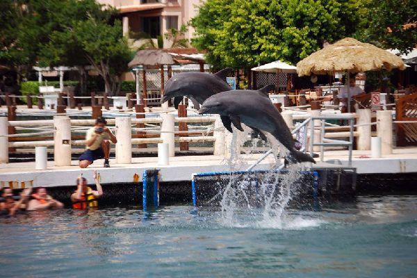 Le tranquille village de Puerto Aventuras ne se situe qu'à une centaine de kilomètres au sud de Cancun. Mais il est encore protégé de son agitation touristique. Il propose des petits établissements hôteliers autour de sa marina et de son bassin à dauphins. Les quais ombragés de ce petit port de plaisance alignent des terrasses de restaurants et de bars ainsi que des boutiques d'artisanat. On peut préférer ...
