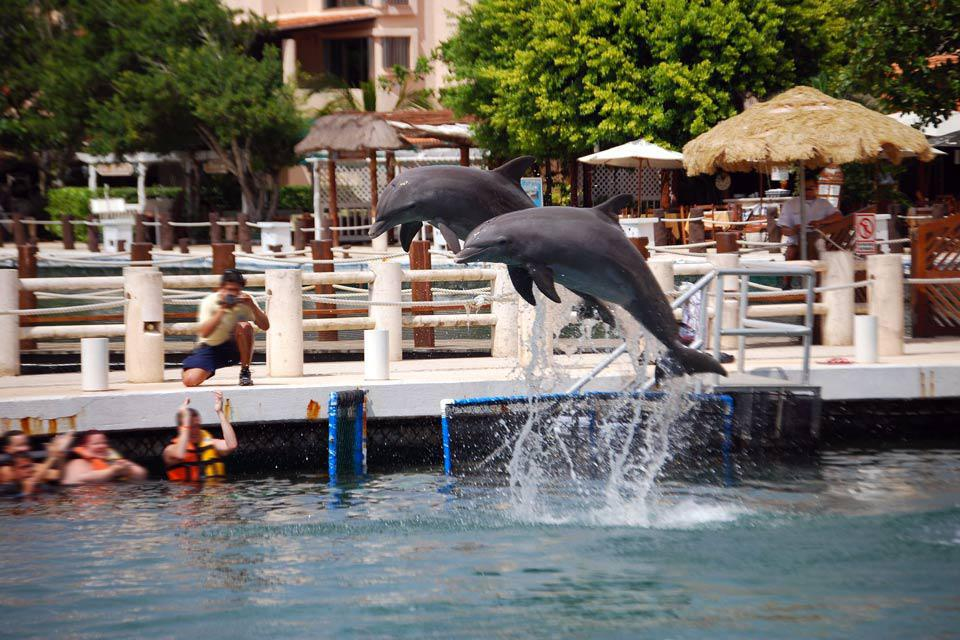 Il tranquillo villaggio di Puerto Aventuras si trova solo un centinaio di chilometri a sud di Cancun. Ma è ancora protetto dal fervore turistico della zona. Propone piccoli stabilimenti alberghieri intorno alla sua marina e alla piscina dei delfini. Sulle banchine ombreggiate di questo porticciolo da diporto sono allineate le terrazze dei ristoranti e dei bar e i negozi di artigianato. E' possibile ...