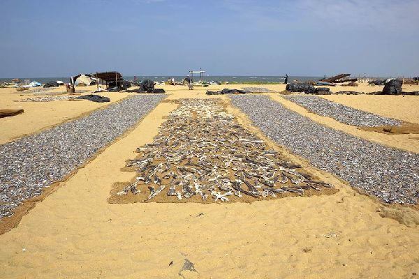 Negombo beach, Sri Lanka.