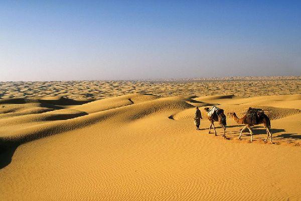 """Au sud de la Tunisie, Douz est une oasis surnommée la """" porte du Sahara """", entourée des superbes dunes de sable blanc et fin du Nefzaoua. Cette ville de 27 000 habitants est située à 488 kilomètres au sud de Tunis. Ses habitants sont essentiellement des Mrazig, des immigrants arabes de la tribu de Banu Sulaym arrivés en Tunisie au XIIe siècle. C'est d'ici que partent les méharées dans  le ..."""