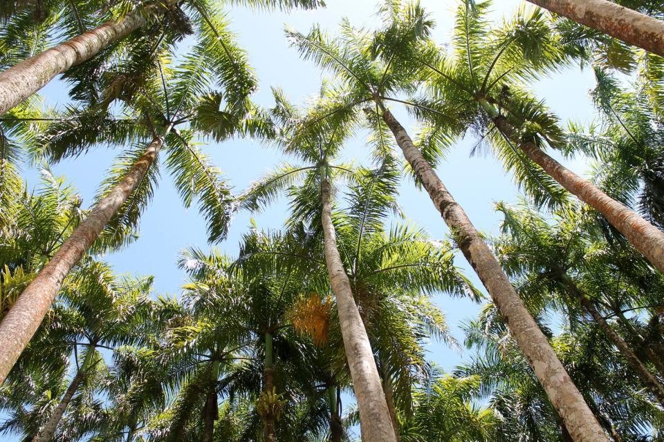 Die Hauptstadt Paramaribo ist auch die größte Hafenstadt des Landes. Die Stadt liegt am Fluss Surinam, 12 km vom Meer entfernt. Bedeutende Gebäude aus der Kolonialzeit wie das Haus des Gouverneurs (heute der Präsidentenpalast) sind nach wie vor erhalten. Die Festungsanlage Zeelandia beherbergt das surinamische Museum sowie einige hübsche Gebäude aus Holz, alte Offiziershäuser. Die im romanischen Stil ...