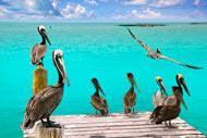 Les oiseaux font parfois un stop sur les quais de Playa del Carmen.