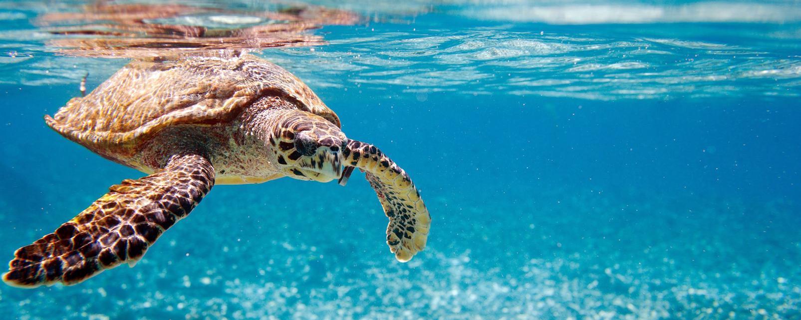 Océan Indien; Seychelles; North Island;