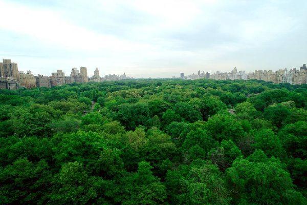Uptown liegt zwischen der 59. und 110. Straße und gehört zu den wohlhabendsten Stadtvierteln von New York. Luxusboutiques, 5-Sterne-Hotels, Luxusgebäude, das Stadtviertel ist zweifach interessant für die Besucher: Dort befindet sich sowohl das Herz der Stadt, der Central Park, und die schönsten Museen von New York. Östlich vom Central Park, in der Upper East Side, trägt ein Teil der Fifth Avenue, zwischen ...