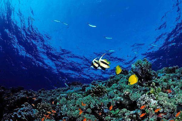 En el sudeste de Egipto se encuentra Marsa Alam, una pequeña ciudad de 6000 habitantes. Está situada junto al mar Rojo, a 800 km al sur del Cairo, y recuerda a un paraíso tropical. Los manglares y las palmeras adornan sus barrios, mientras que las barreras de coral atraen a los más animados.  Marsa Alam es un antiguo pueblo de pescadores que hará las delicias de los submarinistas por sus numerosos ...