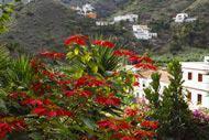 Le Parc de Garajonay, le Parc rural de Majona ou le Parc del Curato sont à proximité.