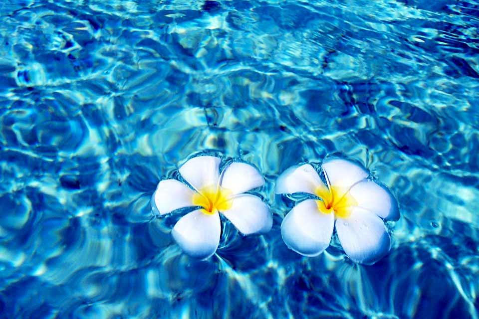 Lhaviyani è l'arcipelago situato a nord est delle Maldive, ben al di sopra di quello di Malé Nord. Conta soltanto 10 isole-hotel, tra cui l'inestimabile One & Only Kanuhura! Vi invitiamo a sognare leggendo le nostre schede, e chissà magari che il sogno non...diventi realtà! Ci sono tutti gli ingredienti affinché scegliate al meglio e prenotiate l'hotel che meglio corrisponde alle vostre aspettative. ...