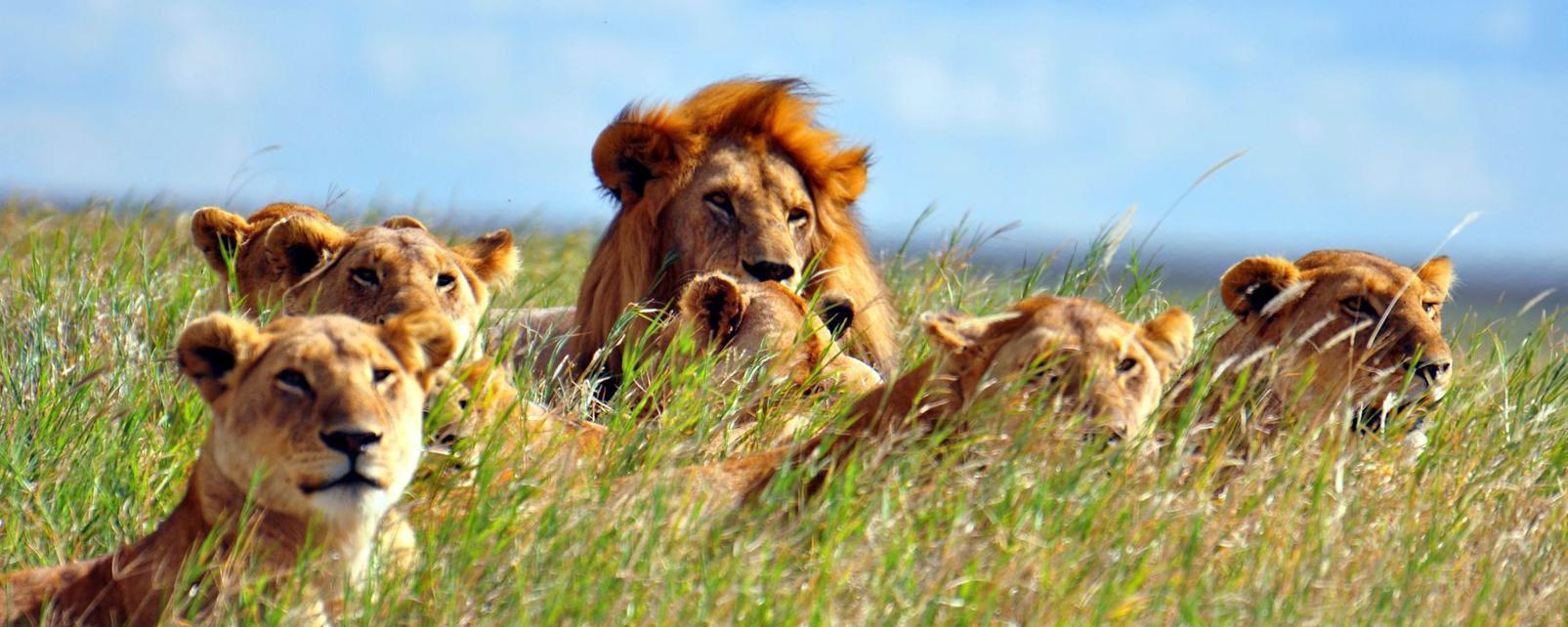 Afrique; Tanzanie; Serengeti National Park;