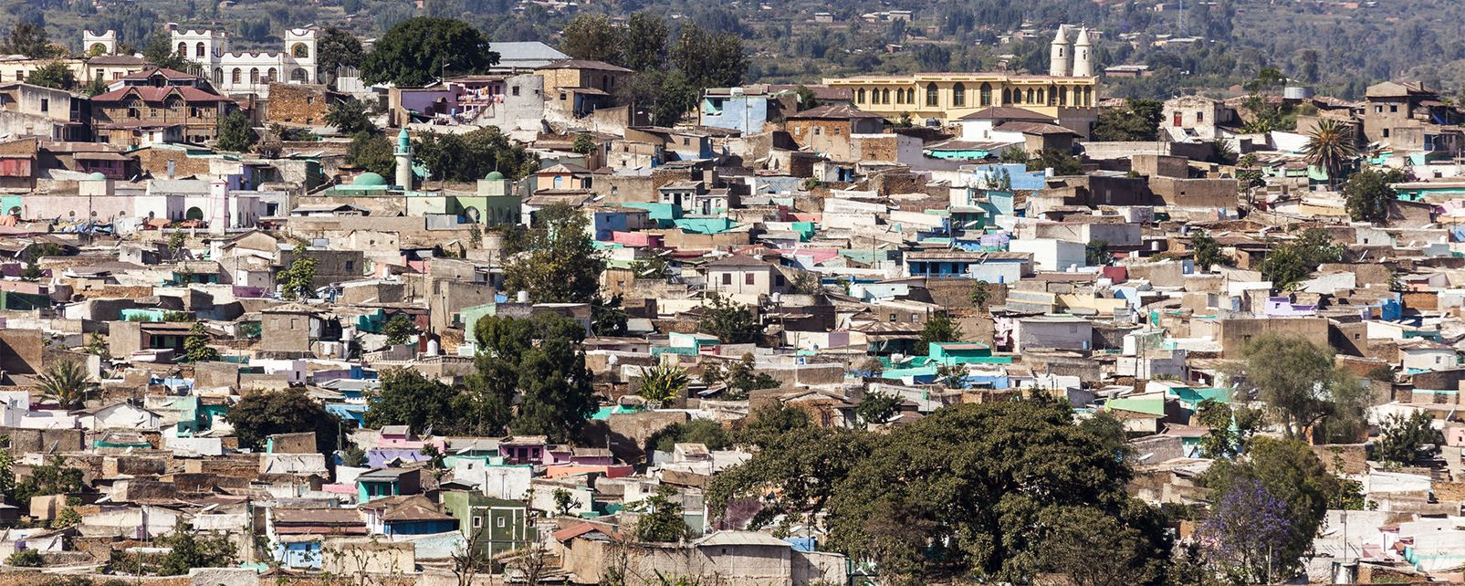 Afrique; Ethiopie; Harar; Jugol; ville; bâtiment; arbre;