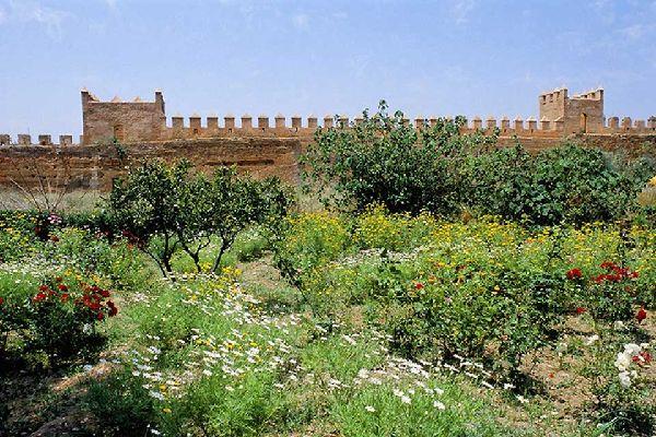 Dopo la visita della Kasba, approfittatene per fare una passeggiata nei rilassanti giardini in stile andaluso.