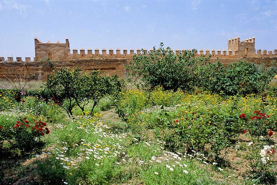 Tras la visita de la kasbah, aprovecha para pasear por los tranquilos jardines de estilo andaluz.