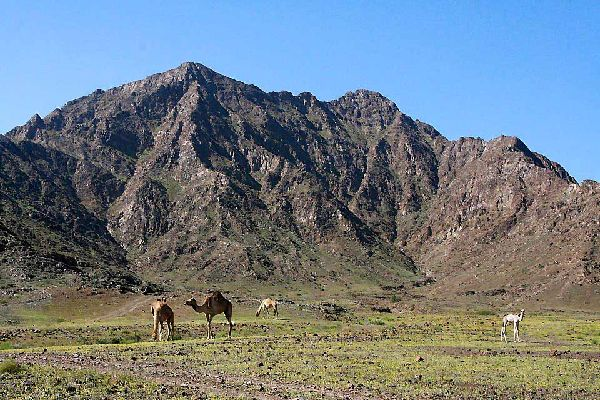 Towards the East and the Gulf of Oman, the Hajar Mountains rise 1,500 metres.